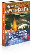 How To Care For Your Koi Fish